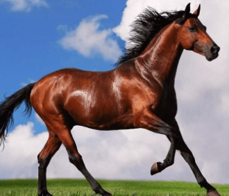 حصان-خيل