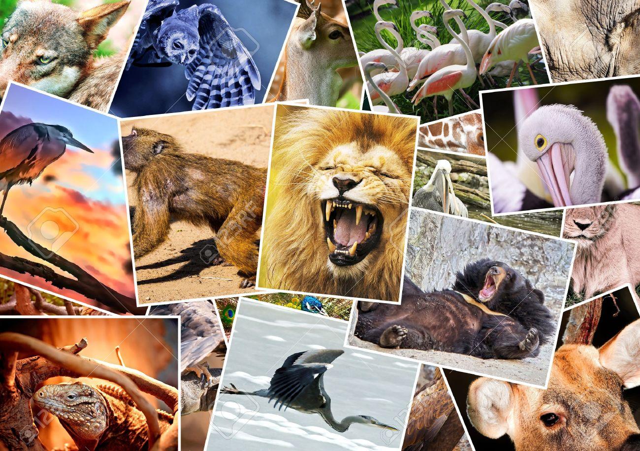حيوانات-اخرى